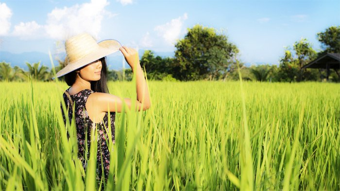 Woman in a sun hat standing in a rice field