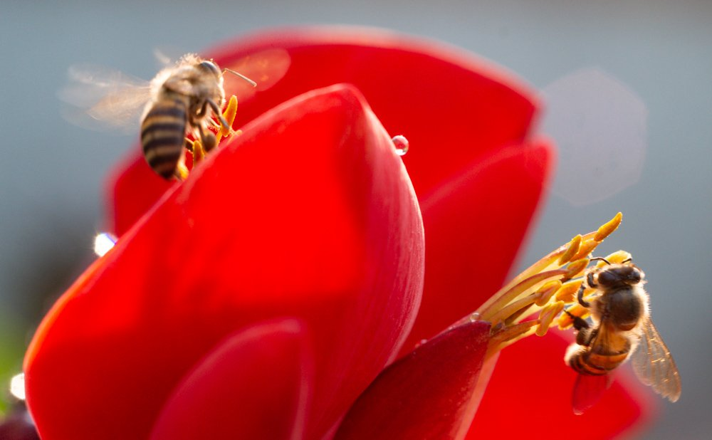 Bees with Motion Blur How To Overcome Unwanted Motion Blur in Your Photos