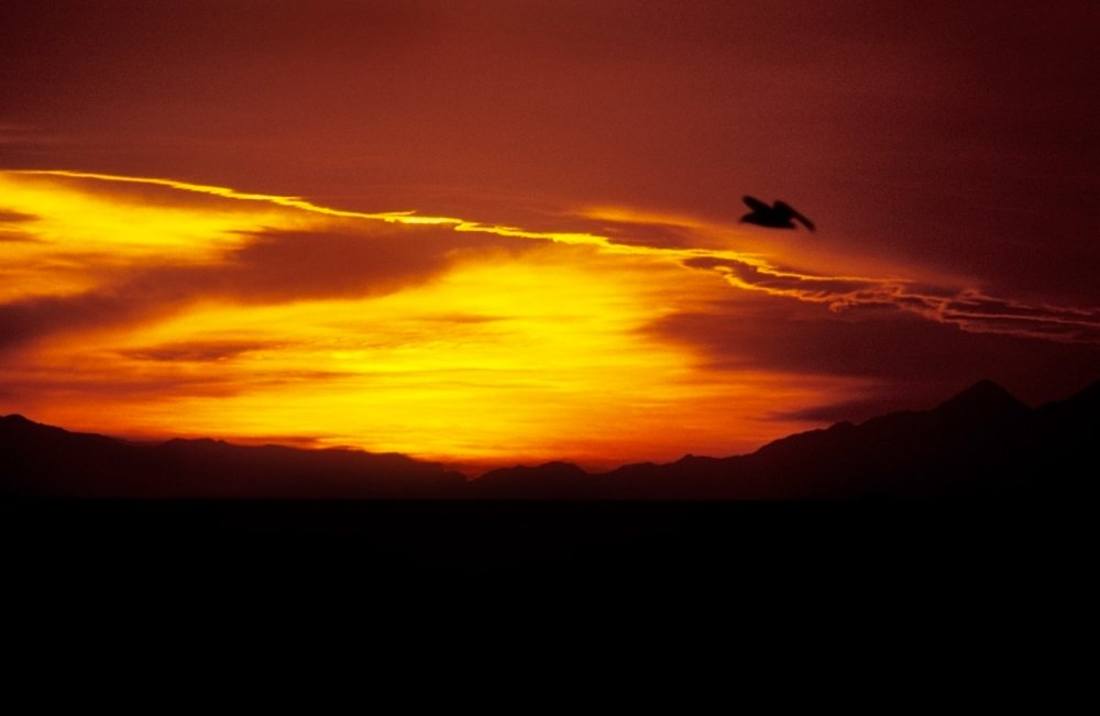 Orange and yellow sunset with a silhouetted bird flying on Cook Strait, New Zealand